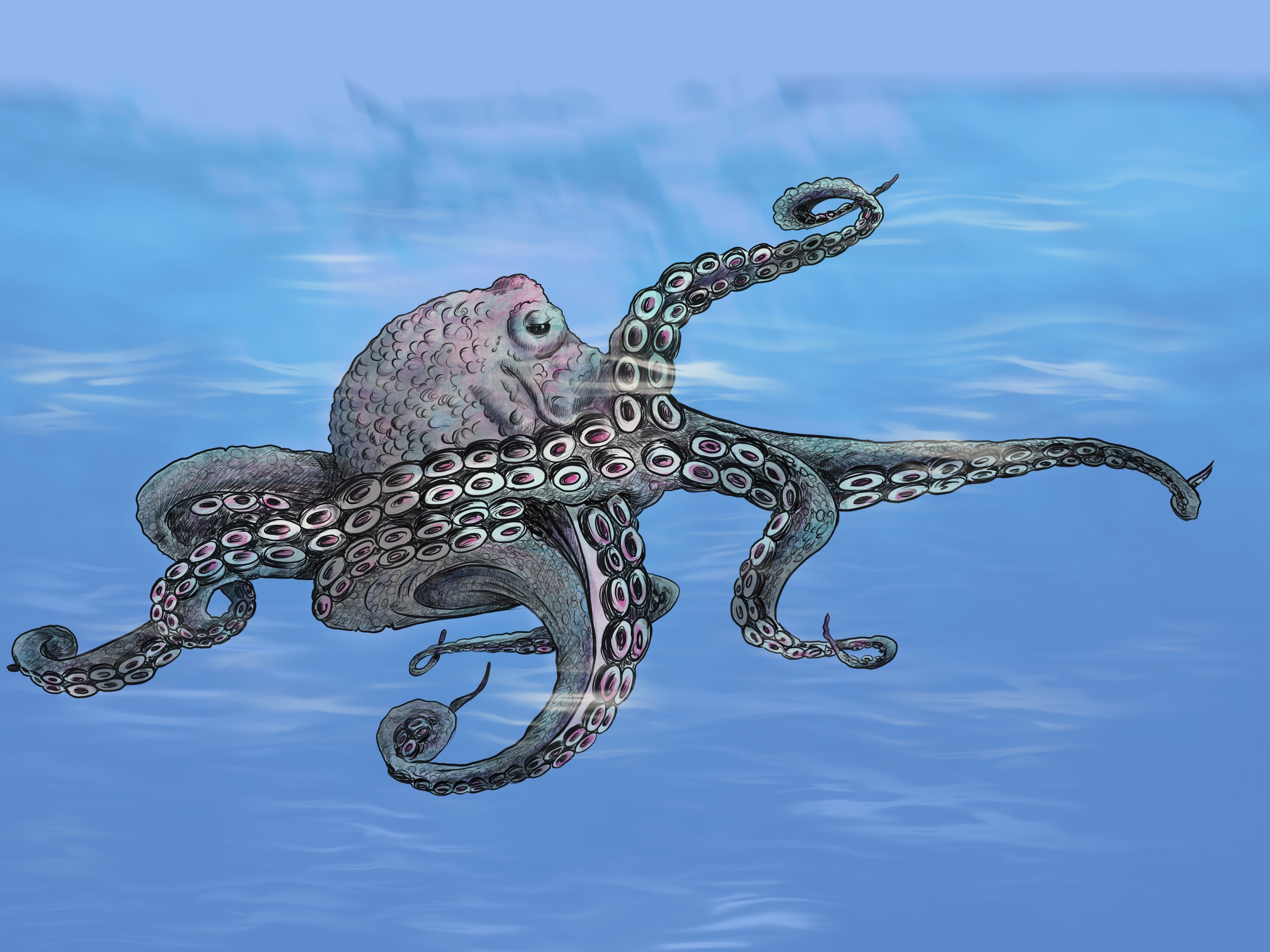 Digital-Octopus